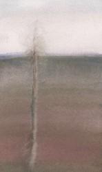 Sinikka Hautamäki - koivu