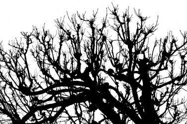 Sukupuu I