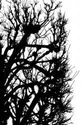 Sukupuu III