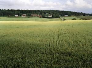 Tapio Heikkilä - Aurajokilaakson Kulttuurimaisema