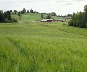 Tapio Heikkilä - Pohjois-Karjalan vaarakylät, Kirvesvaara